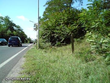 Gefahrenpotential für den entgegenkommenden Fließverkehr auf der stark befahrenen Bundesstraße
