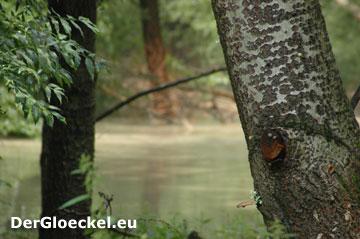 Impressionen Hochwasser Juni 2009 - Hainburg/Donau