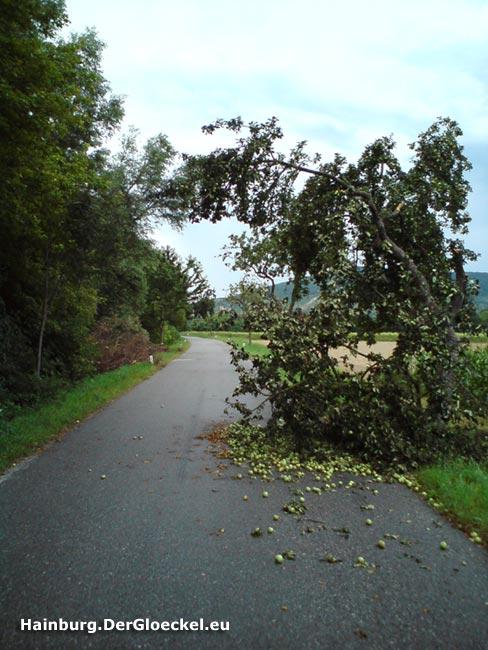 Abgebrochene Teile eines Obstbaumes blockieren eine vollständige Fahrspur auf der L 2024 in Hainburg
