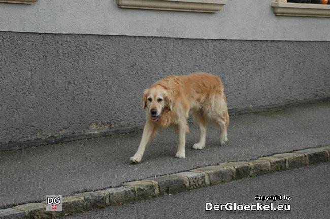 Update vom 15.10.09: Der genannte Hund konnte am 13.10.09 um 10:55 Uhr, diesmal in der Carnuntumstraße, angetroffen werden.