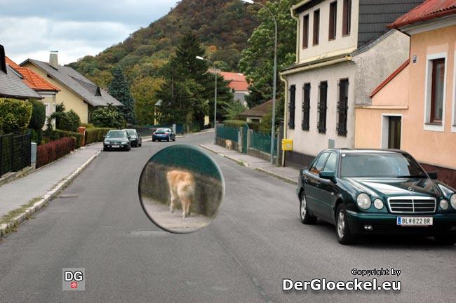 Nur zur Vervollständigung: Der Hund querte zuvor, ohne auf den Verkehr zu achten, die Fahrbahn ...