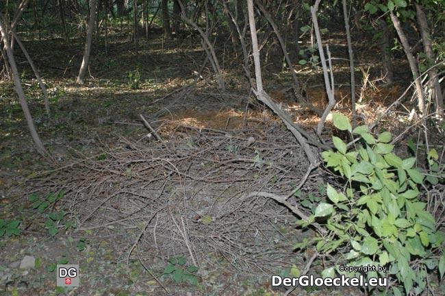 hier deponierte der Mann seine Grünabfälle - eine der zahlreichen Stellen in dem kleinen Wald in dem die Anrainer Ablagerungen vornehmen