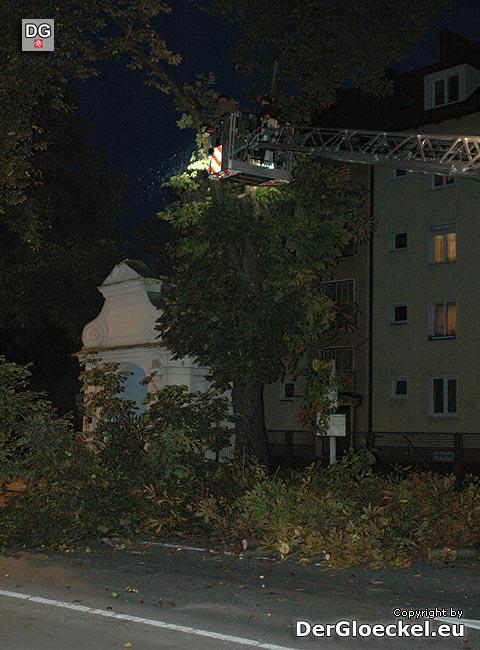 Arbeiten vom städtischen Bauhof und der FF Hainburg/D. in der Baumkrone