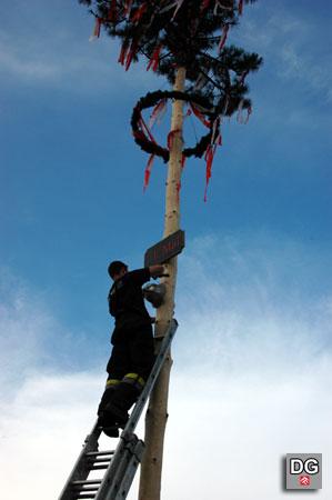 Die Auftsellung des Maibaumes durch die FF Bad Deutsch-Altenburg